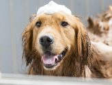 How to Bathe a Dog or Cat Using Medicated Shampoo