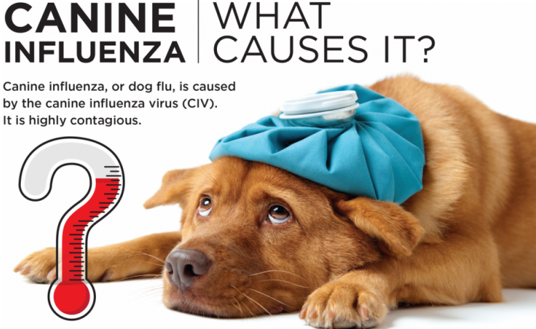 Canine Influenza: What Symptoms Require a Call to the Vet?