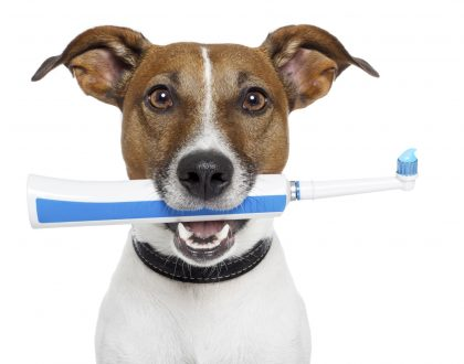 How to Brush your Pet's Teeth